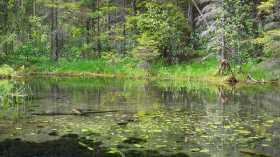 Seasons Meditation - Spring
