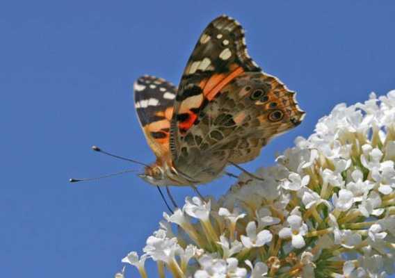 Butterflies on Radar