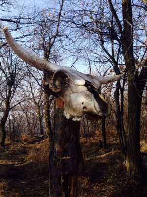 Season of the Bones