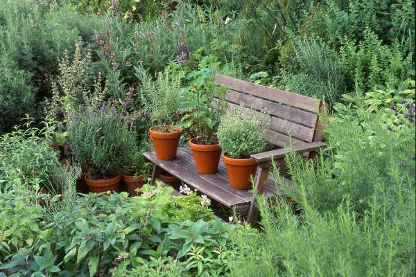 Magic in the Herb Garden