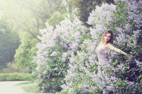 Lose Yourself in the Magic of Lilacs