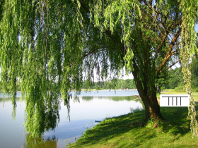 The Magical Celtic Month of Willow