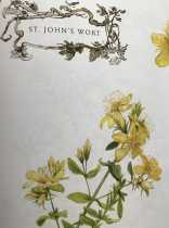 Magical Midsummer's Day & Saint John's Wort
