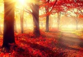 The Magic of Autumn Leaves