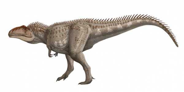 Giganotosaurus: Be Spectacular