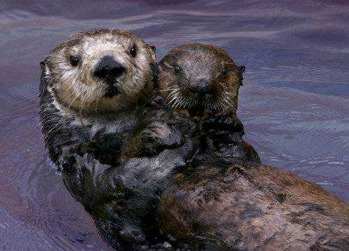 The Mighty Dead: Toola, the Sea Otter