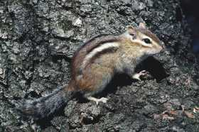 Chipmunk: Wise Use of Resources