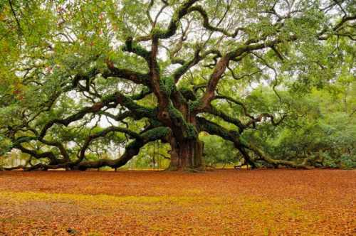 b2ap3_thumbnail_angel-oak-tree-l.jpeg