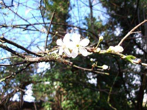 Celebrating Tree Flowers