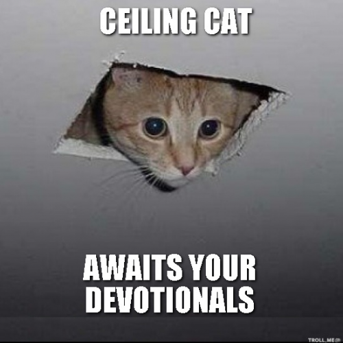 b2ap3_thumbnail_ceiling-cat-awaits-your-devotionals.jpg.png