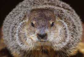 How Much Ground Would a Groundhog Hog...