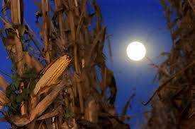 Shine On, Harvest Moon: The Same-Sex Version