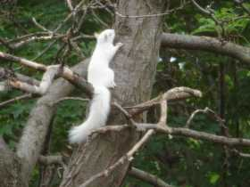 Of Goddesses and Squirrels