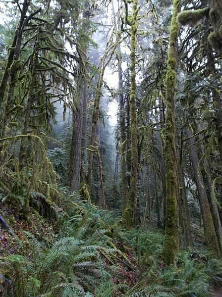 b2ap3_thumbnail_448px-Oregon_forest_and_mist.jpg
