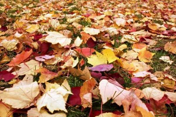 As the leaves begin to fall...