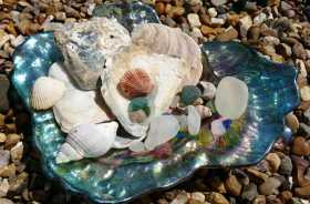 Shells & Sea Glass