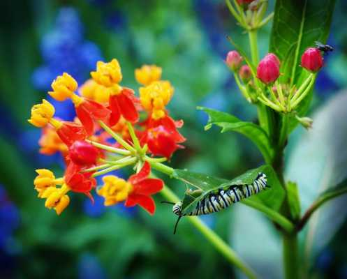 The Sweet Beltaine of a Butterfly