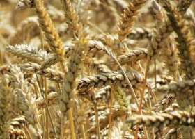 Lammas, Lugh and the Miracle of the Harvest