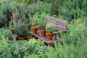 Magic in the Herb Garden