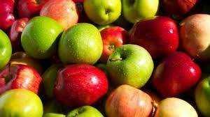 Apple Tree Healing Wisdom