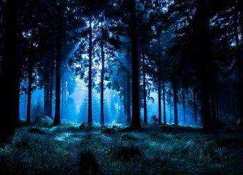 Dirt Spell: Black Forest Magic