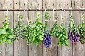 Easy Money Spell:  DIY Manifesting Herb Magic