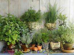 Herbs of Abundance: Grow Prosperity Herbs