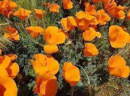Pagan Poppy Power: Seeds of Abundance