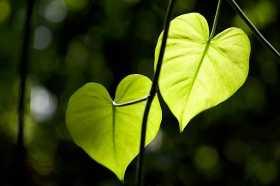 Two Hearts Beat as One: Ritual Rub