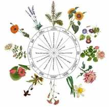 Your Celestial Essence: 12 Floral Healers For Each Sign Of The Zodiac
