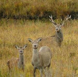 The Elements: Deer and Spirit
