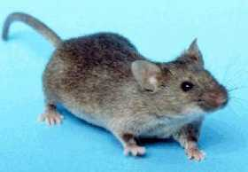 MOUSE FAMILY: Examine Life's Lessons