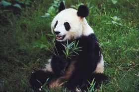 The Teachings of the Giant Panda: Embrace Diversity