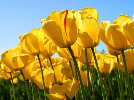 A Spring Equinox Ritual for Energy, Creativity & Abundance
