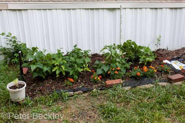 Intentional Gardening