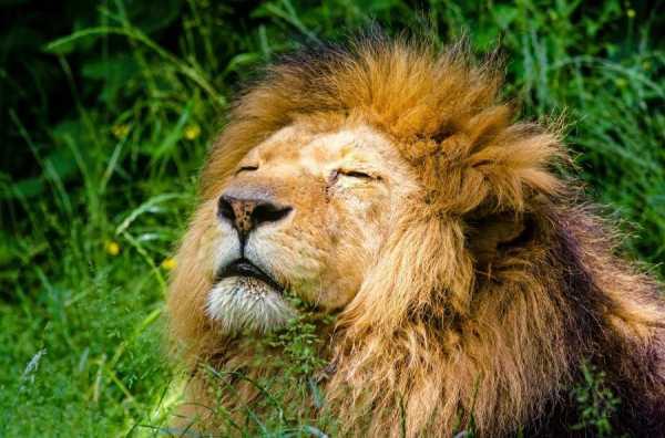 Be Like Leo the Lion