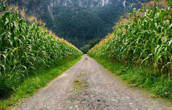 Let's Talk About Corn, Lugh, and Lammas