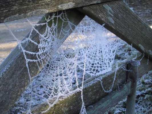 Weaving a Stronger Web