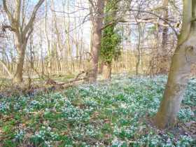 The Songs of Imbolc