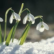 Bridey's Spring