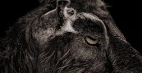 Why Black Phillip Eats the Lion from the Lion's Den