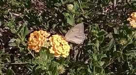 Butterflies Across Nevada