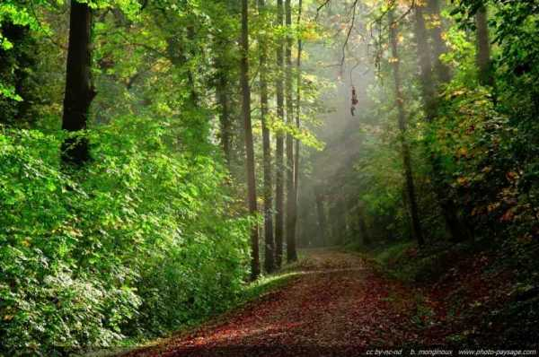 How Simply Taking a Walk Can Activate Your Intuition and Magical Power