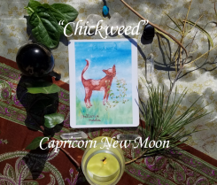 New Moon in Capricorn Reading with Cat Herbal: Chickweed
